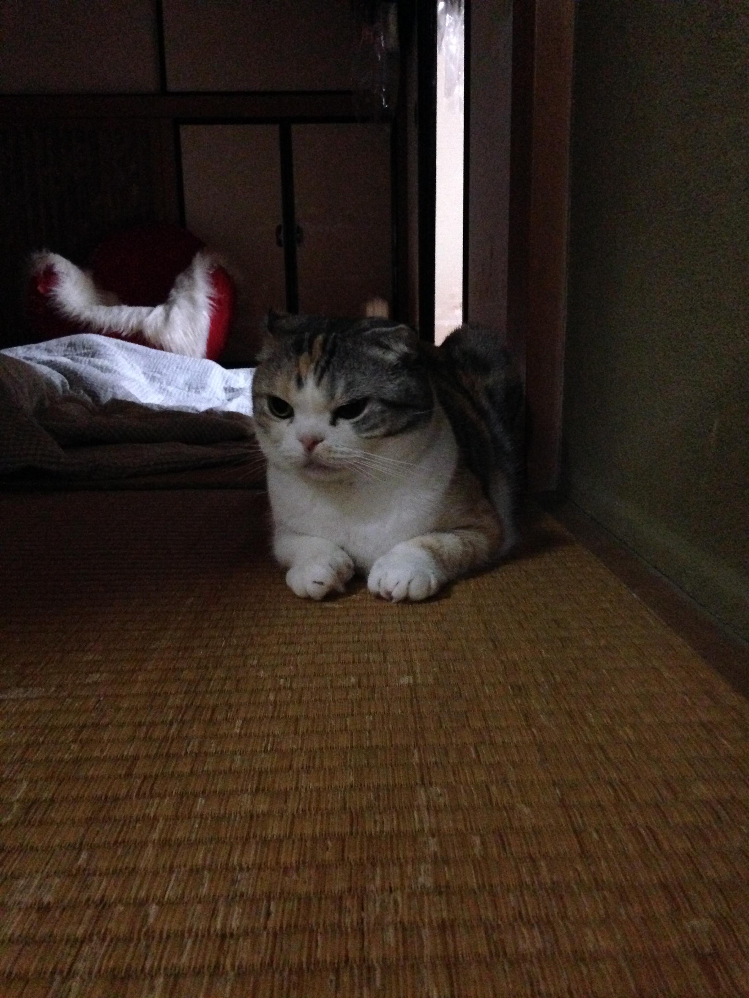 眠れない。。。【うちの猫】
